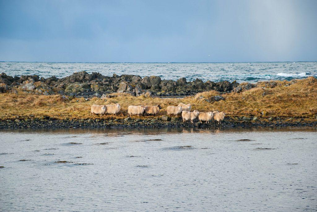 Péninsule de Vatnsnes - Iceland