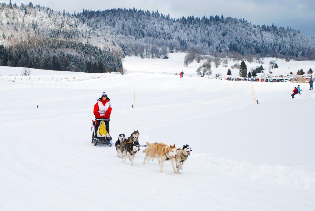 Course de chiens dans le Jura