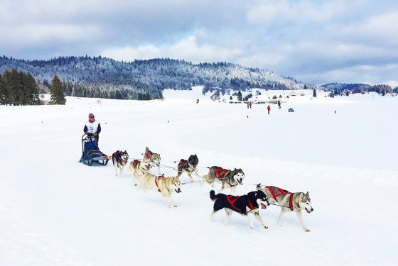 Course de chiens de traineau dans le Jura