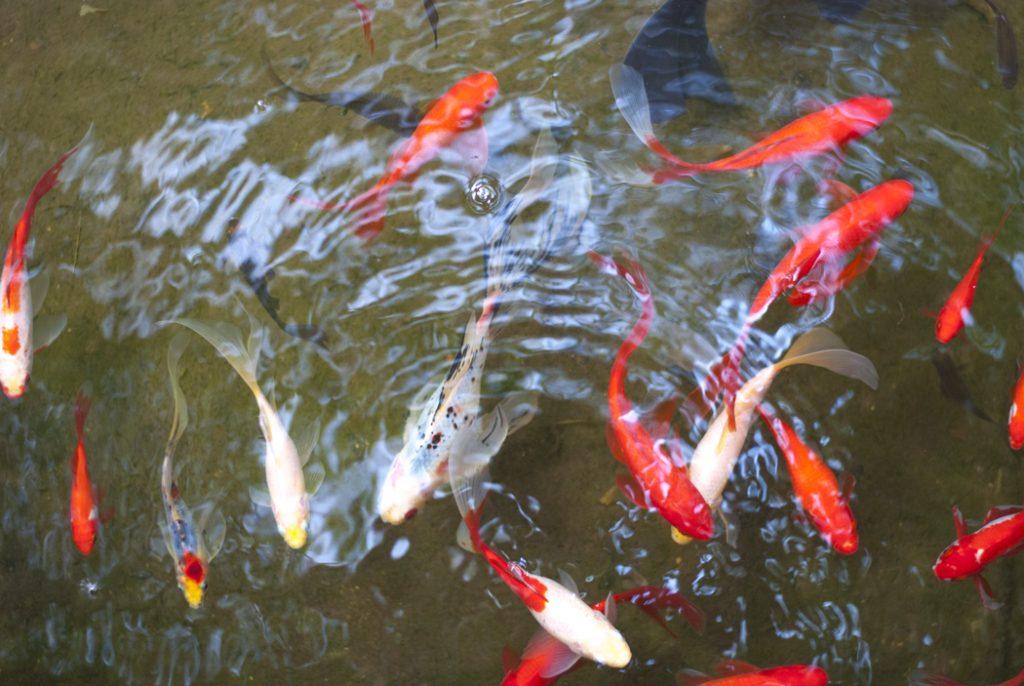 poissons_serres_auteuil