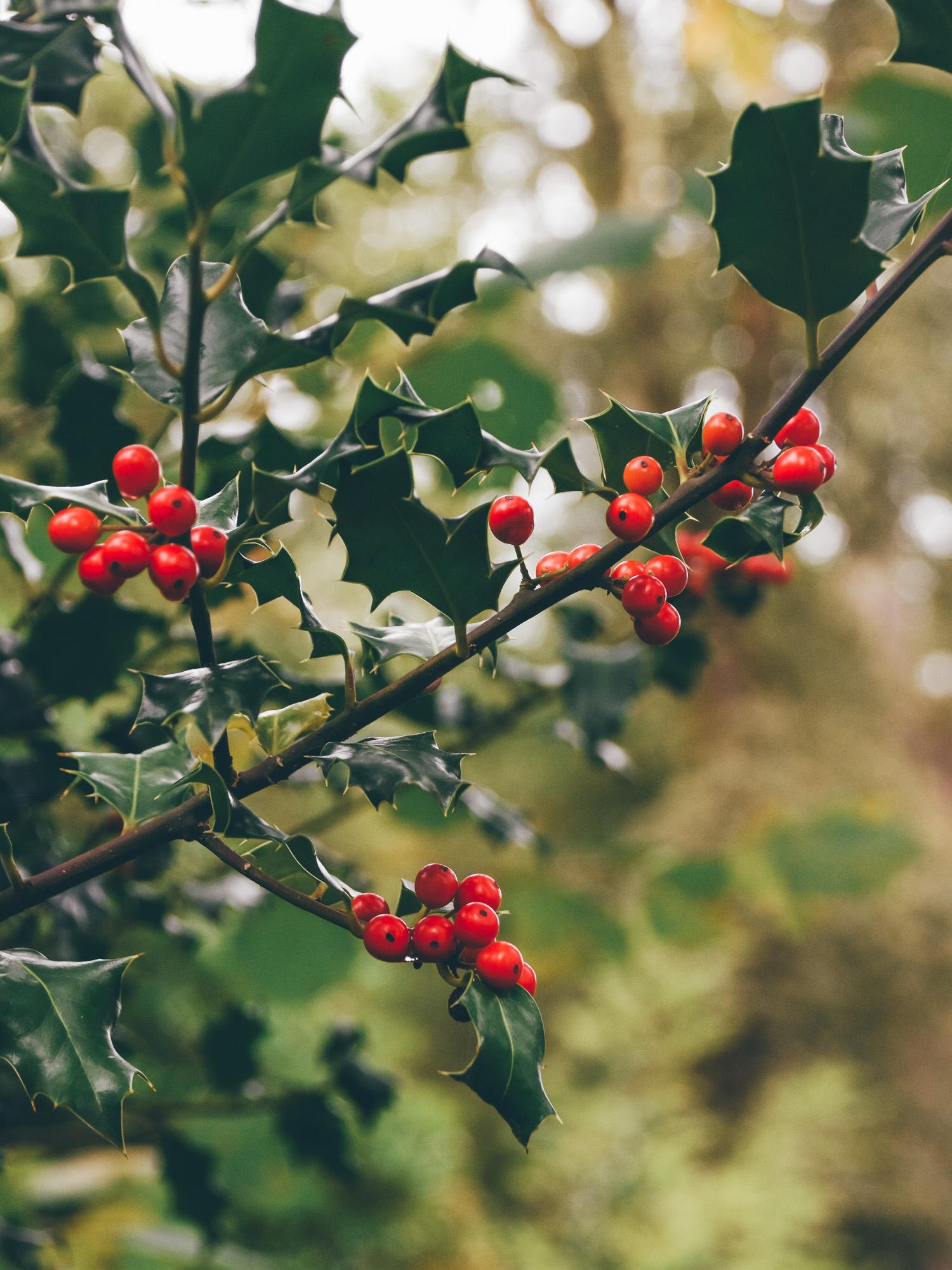 Leaf • Petites douceurs d'automne
