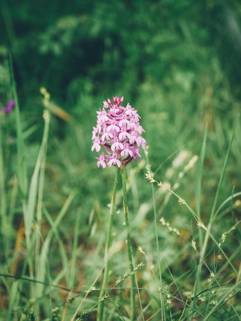 Leaf - Escapade dans le Gers - Orchidée sauvage