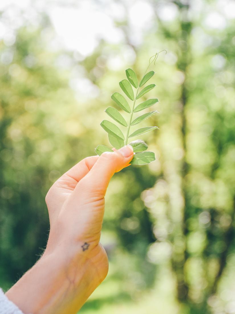 Leaf - Escapade dans le Gers