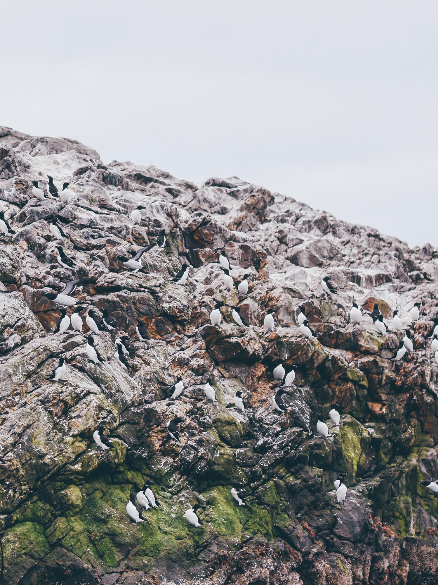Leaf • Randonner dans les fjords de Norvège du nord, rencontrer les Sami et observer les oiseaux de mer.