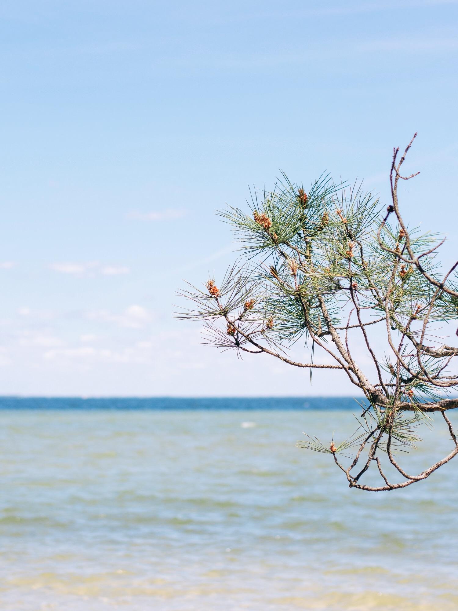 Leaf - Biscarrosse Grands Lacs - un week-end Slow